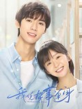 CHH1311 : Professional Single โสดมืออาชีพ (ซับไทย) DVD 4 แผ่น