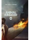 se1718 : ซีรีย์ฝรั่ง Animal Kingdom Season 2 (ซับไทย) DVD 3 แผ่น