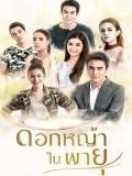 st1569 : ละครไทย ดอกหญ้าในพายุ DVD 4 แผ่น