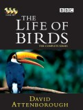 ft082 :สารคดี The Life Of Birds DVD 3 แผ่นจบ