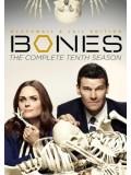 se1339 : ซีรีย์ฝรั่ง Bones Season 10 [พากย์ไทย] 5 แผ่น