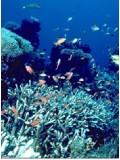 ft019 :สารคดีสัตว์ใต้น้ำ 1 แผ่น