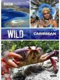ft043 :สารคดี Wild Caribbean แดนสวรรค์คาริเบียน  DVD Master 1 แผ่นจบ