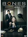 se0450 : ซีรีย์ฝรั่ง Bones Season 5 พลิกซากปมมรณะ ปี 5 [ซับไทย] 11 แผ่นจบ