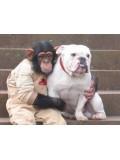 TV011 : ขำกลิ้งลิงกับหมา DVD 2 แผ่น